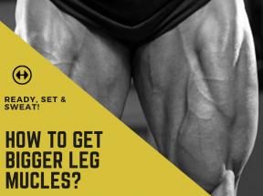 leg muscles